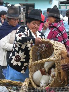 Full Day Otavalo Packages