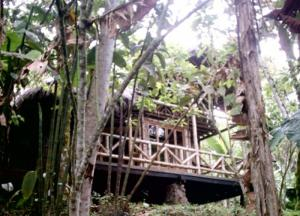 Full Day Maquipucuna, Cloud Forest Packages