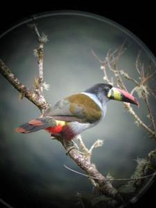Full Day Birdwatching Packages