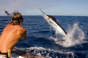 Fishing ( Swordfish )