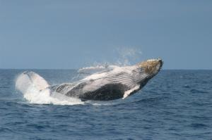 Whale Watching Packages